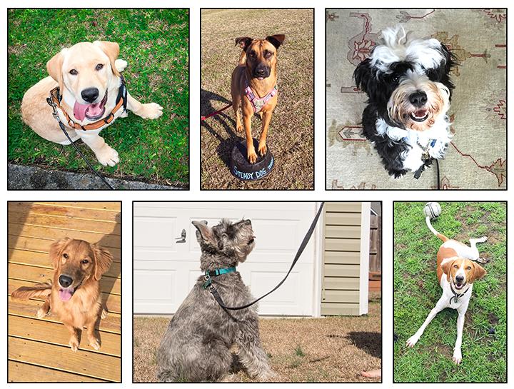 steady dog training clients